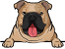 Bulldog ( Fawn )