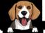 Beagle 1