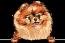 Pomeranian-(Red)