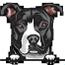 Pit bull 8