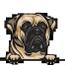 Bull mastiff