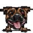 Stafforshire bull terrier 2