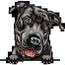 Pit bull 4