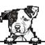 Pit bull