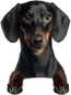 duchshund